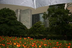 under my umbrella in tokyo (julia_ho) Tags: park summer rain japan umbrella garden nippon hamarikyu shiodome tokio