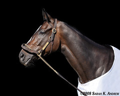 Zenyatta: Horse of the Year? (Rock and Racehorses) Tags: california ca portrait horse blackbackground bay eclipse photo moss mare profile champion racing doorway zen horseracing balance superstar halter racehorse thoroughbred superhorse equine tack distaff filly santaanita hoty mikesmith undefeated shirreffs breederscup rockandracehorses horseoftheyear curlin vertigineux sarahandrew visiongroup streetcry zenyatta sarahkandrew mondatta notack
