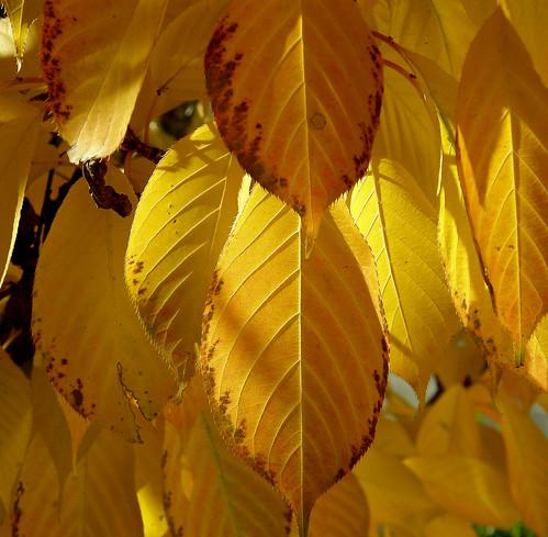 PB090619-otoño