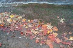 leaves washing up