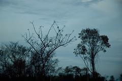 BR 242 (Roberta Smania) Tags: paisagem viagem br242