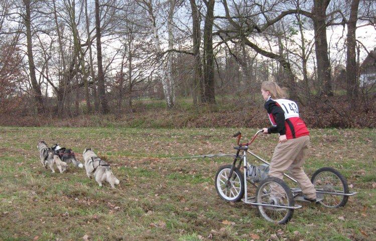 מירוץ מזחלות כלבים