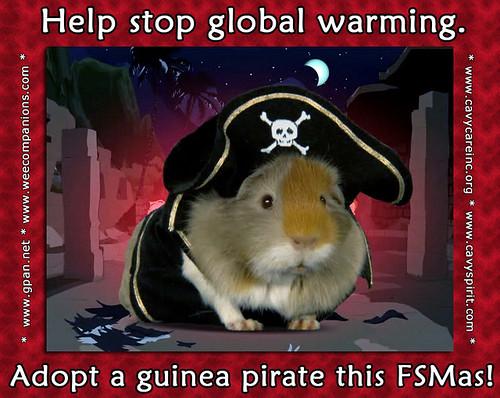 Adopt a Guinea Pirate!