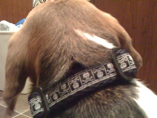 New Collars