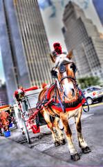 Horse and the City (Tony Shi Photos) Tags: newyorkcity tour centralpark applestore plazahotel hdr grandarmyplaza gmbuilding  southeastcorner horsedrawncarriages  nikond700 statueofgeneralsherman tonyshi  59thst5thave