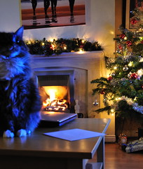 PIppa wishes you a blue blue-blue christmas (harribobs) Tags: christmas lights pippa hohoho madcat catnipaddicts