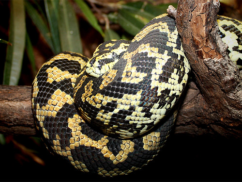 Flickriver Photoset Reptilien  Reptiles by Sexecutioner