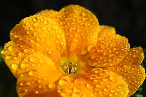 A Spring Sprinkling
