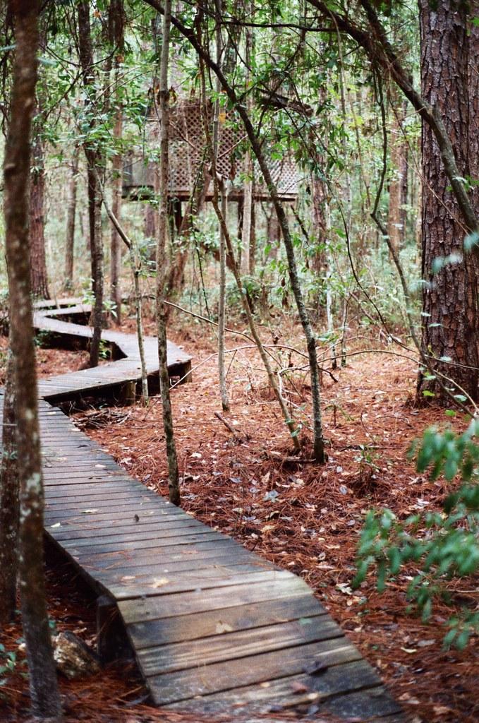 Treehouse Hostel Georgia Part - 37: Tree House + Wood Path (jacquelinedandelion) Tags: Wood Forest Georgia  Hostel Path Treehouse