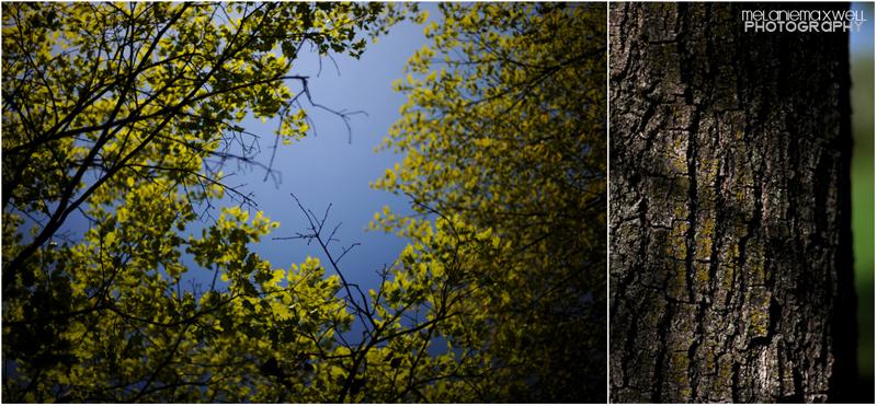 Trees1BLOG