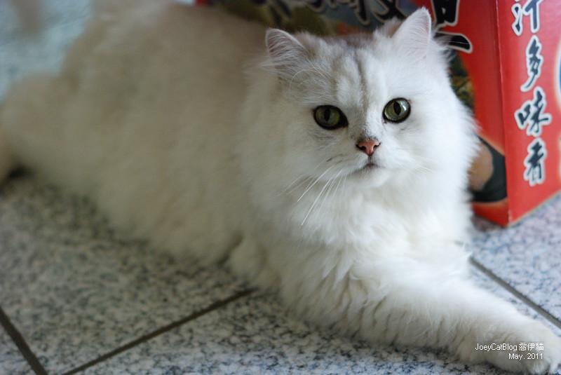CAT_米米__DSC_1139