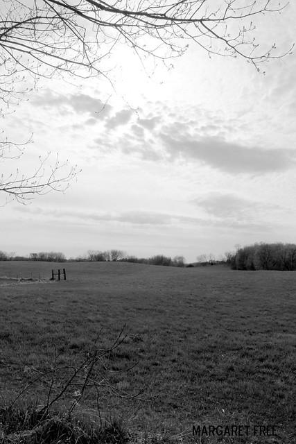 field sans corgi
