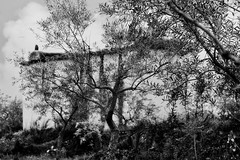 o pombal e as oliveiras - the pigeon-house and the olive-trees (@uroraboreal) Tags: bw portugal pigeonhouse olivetrees pombal trsosmontes oliveira mogadouro uroraboreal