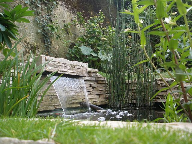 mon p'tit bassin dans mon p'tit jardin - Page 2 5822271568_c9b683f1b0_z