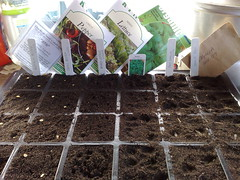 First Spring Sowing
