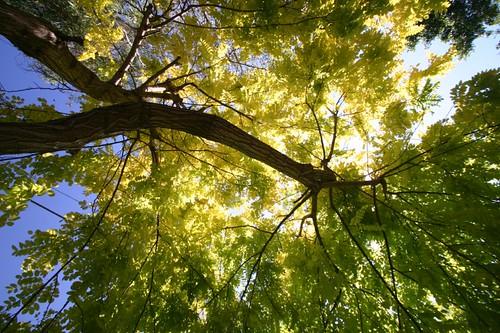 Tree, Sydney sururbia.