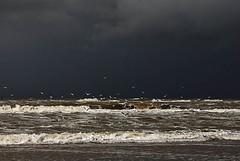 Dark cloud approaching the beach at Wassenaar (hansKiek) Tags: cloud mer beach strand coast waves noordzee wolke northsea nordsee plage meeuw meeuwen branding schuim bui merdunord seaguls wellen wolk kust golven brekers zeemeeuwen breker