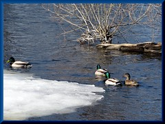 (LuciaB) Tags: river ottawa
