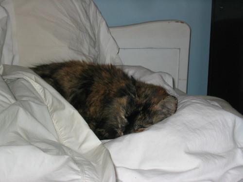 cat pictures 031