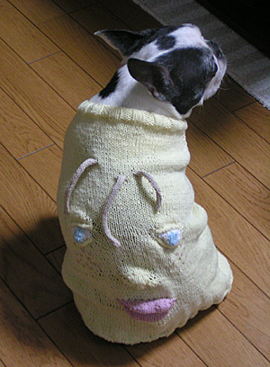 My doggie wears 3D-pullover