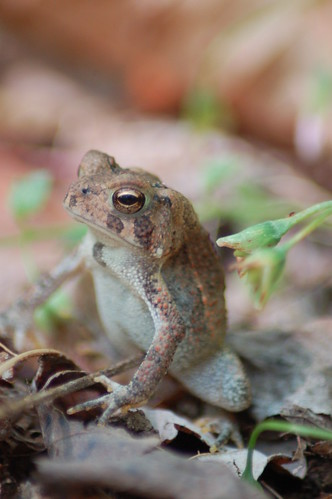 Toad on Guard