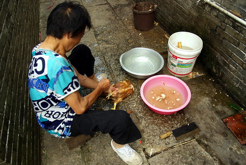 Chicken in Zili village, Kaiping city, China