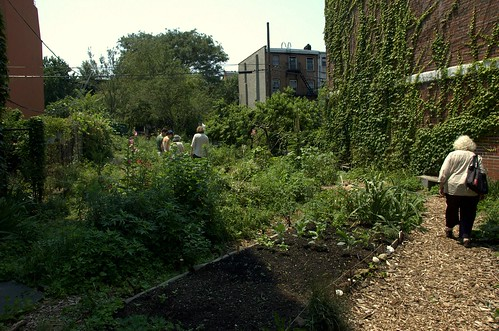 Warren-St Marks Community Garden