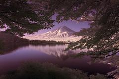 Fuji-yama Reflection in Kawaguchi-Ko (aeschylus18917) Tags: sky mountain lake reflection tree nature japan reflections landscape ir nikon scenery fuji d70 nikond70 surreal mountfuji infrared 日本 fujisan 富士山 1870mm mtfuji kawaguchi yamanashi kawaguchiko fujiyama lakekawaguchi 赤外線 山梨県 1870f3545g yamanashiken yamanashiprefecture kawaguchilake ダニエル nikkor1870f3545g danielruyle aeschylus18917 danruyle druyle ルール ダニエルルール nikkor1870f3545gdx