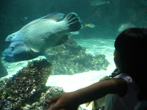 Aquarium, La Rochelle 2