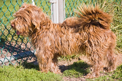 DCHS Dogs 08-24-08-2886