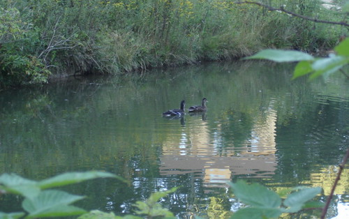 duck-pond-picture