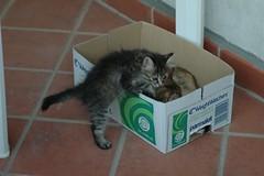 Gatta con il suo piccolo (virgiliomulas.) Tags: gattino gatta virgiliocompany