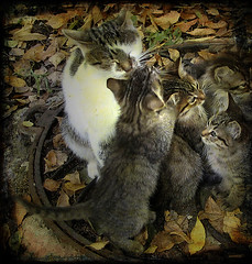 mother cat (axiepics) Tags: cats museum cat europe village mother nuclear kittens ukraine disaster ukrainian chernobyl ukraina folkmuseum chernobil pripyat chornobyl nucleardisaster ukrainska outdoorfolkmuseum copyrightalexskellyallrightsreserved