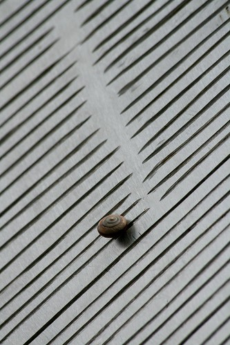 Lonely Snail II (by niklausberger)