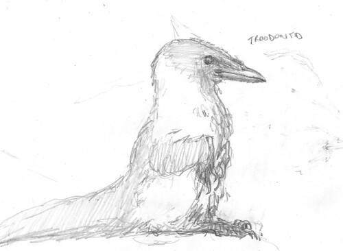 troodontid corvidicus dinosauroid