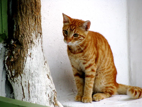 Ginger Cat, Mykonos