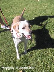 Baxter checking Me Out (phil_sidenstricker) Tags: dog canine donotcopy valleyofthesunphoenixmetro upcoming:event=981998 southmountainfarmphoenixazusa