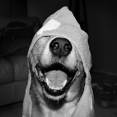 Happy Face (crashmattb) Tags: toby bw dog pet bokeh canonef50mm18ii canoneosdigitalrebelxti