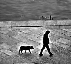 One man and your dog......a love. (candido baldacchino) Tags: camera cybershot sonycybershot
