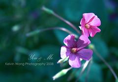 You & Me (Kelvin Wong (Away)) Tags: pink flower nature beauty canon wonderful amazing flora soft dof bokeh depthoffield excellent adelaidebotanicgarden interestiness softart canoneos400d canoneosrebelxti aplusphoto canoneoskissx kelvinwong piscesromance