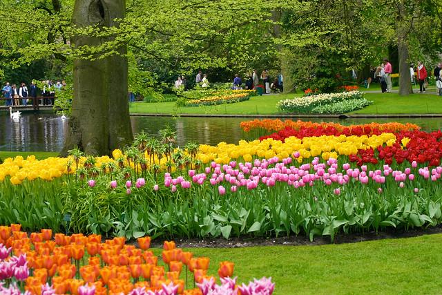 صور اجمل حدائق الورد 2013 ، صور حدائق الزهور 2013 ، صور حدائق ورد 2013 3033366476_75f5fb3065_z.jpg