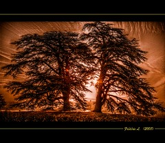 Arbres Sculaires (France, Menars) (Frdric.L) Tags: sunset sun france tree garden soleil landscapes arbres paysages hdr coucherdesoleil parcs outstandingshots specialtouch platinumheartaward hdraward frdriclavaux