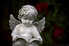 Cherub (Rex Maximilian) Tags: california flower leaves statue angel book losangeles leaf wings exterior cherub emmashouse