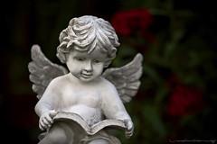 Cherub (Rex Maximilian) Tags: california flower leaves statue angel book losangeles leaf wings exterior cherub emmashouse