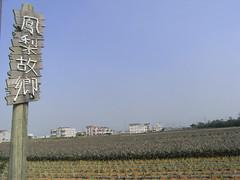 農村再生條例真能提升農村?圖為嘉義民雄,鳳梨的故鄉。莫聞攝