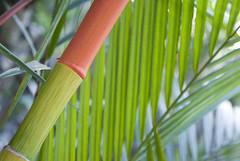 20080302-DSC05170 (Eduardo Mustad) Tags: red bamboo flikr a100