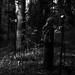 Darkthrone behind the scenes 2001