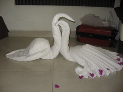 IMG_4453 (Beth77) Tags: mexico swans towels loscabos