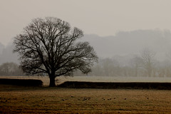 in the bleak midwinter (VickyvdL) Tags: winter tree oxfordshire somerton charlbury