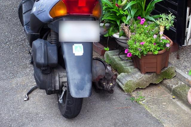 Today's Cat@2011-06-24